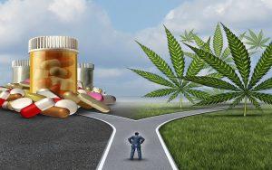 cannabis vs drugs