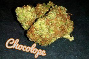 Chocolope-strain