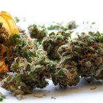 medyczne odmiany marihuany