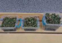 bialorusin zatrzymany za posiadanie marihuany Olawa