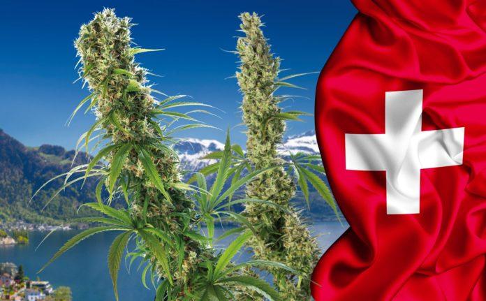 Szwajcaria: 5000 obywateli będzie legalnie palić marihuanę