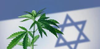 Izrael liderem w produkcji marihuany medycznej?