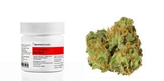W aptekach brakuje medycznej marihuany,
