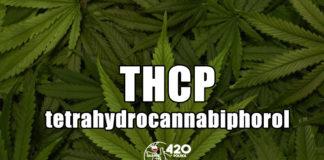 tetrahydrocannabiphorol THCP tetrahydrokannabiphorol