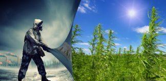 Biopaliwo z konopi