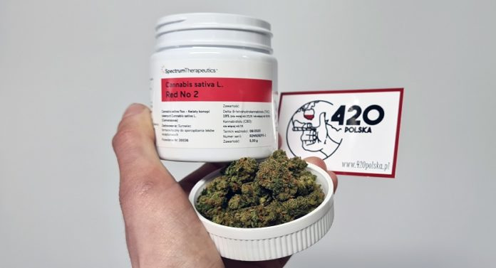 Medyczna Marihuana Spectrum Therapeutics Red no. 2