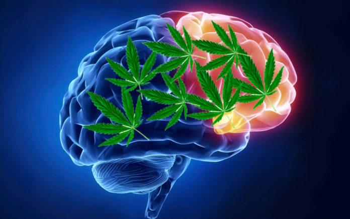 cerebrastenia pourazowa cannabis
