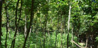 Spytkowice plantacja