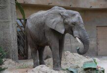 Cbd słonie warszawa