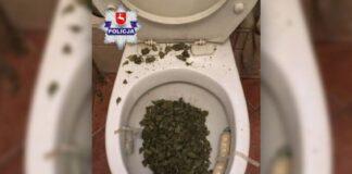 marihuana w toalecie