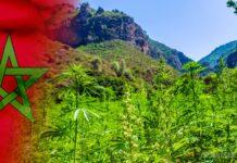 Maroko zalegalizuje marihuanę