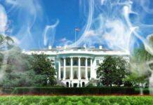 marihuana biały dom