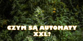 Czym są Automaty XXL?