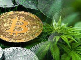 plantacja bitcoin koparki