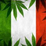 włosi chcą legalnej marihuany